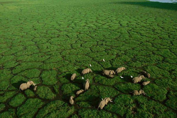 Ground Breaking Animal Census