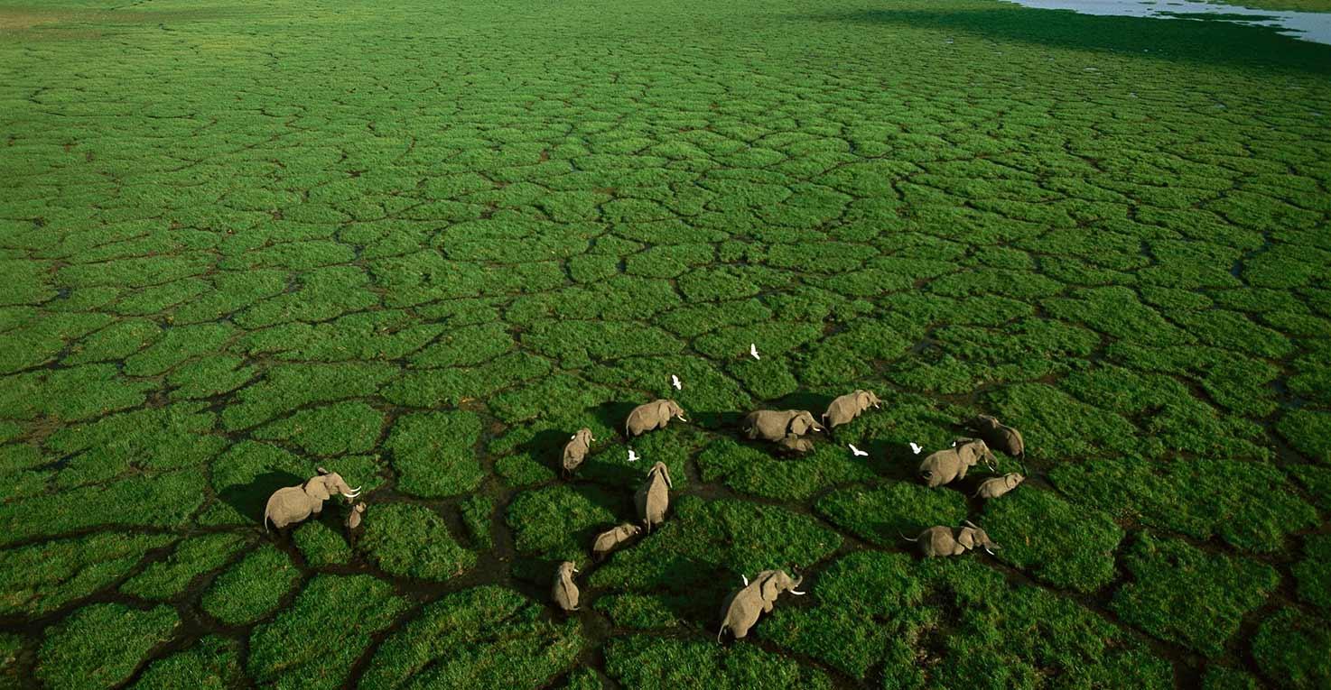 Ground-breaking Animal Census